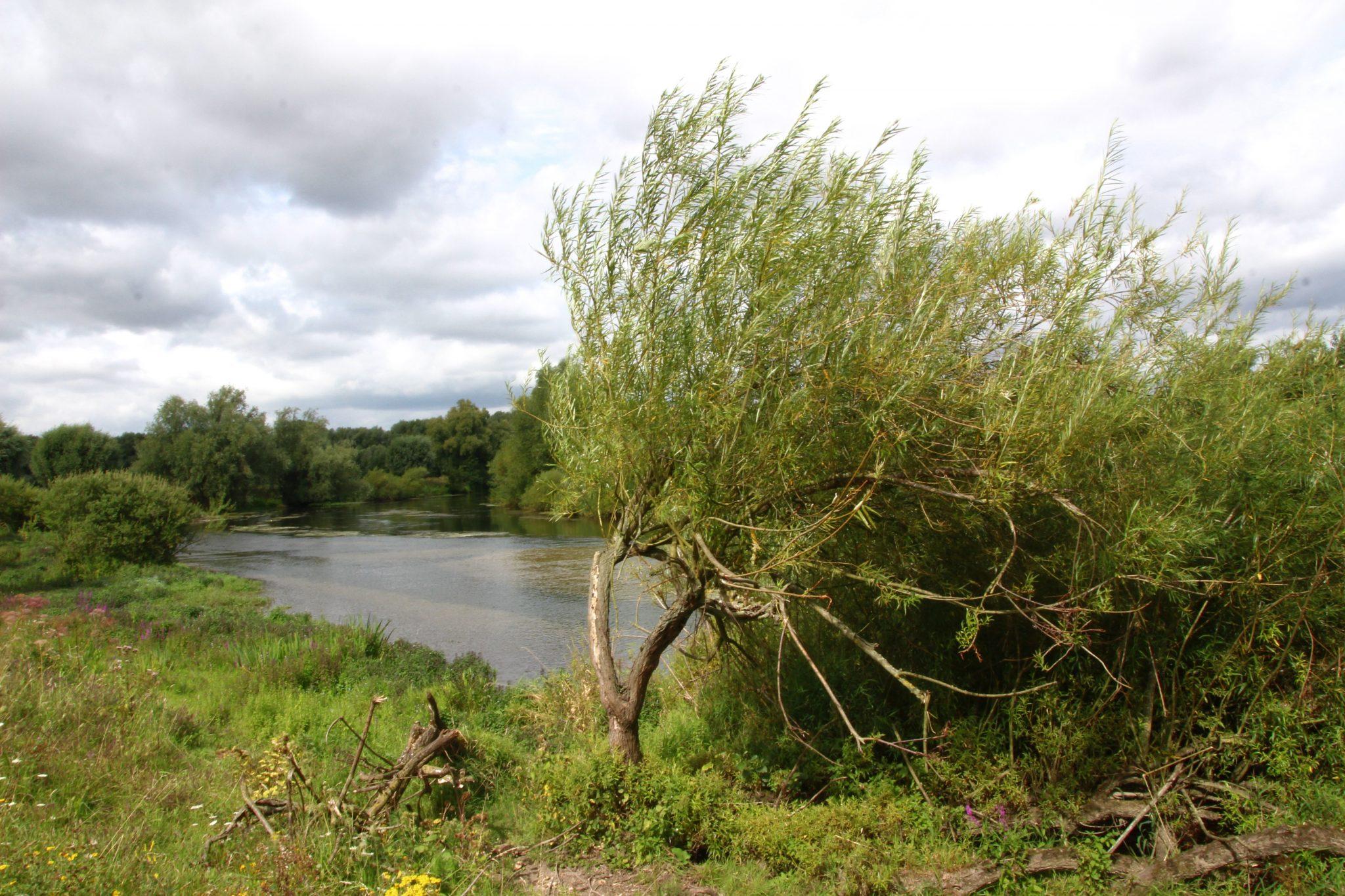 Wilde und unberührte Natur in Westfalen - Heide und Flussauen