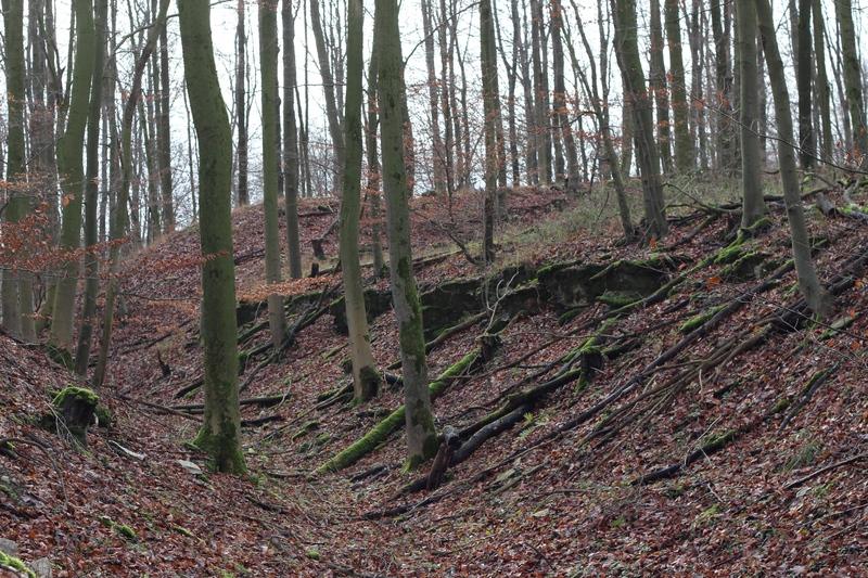 Hünenburg, Wallburg, Paderborn, Burg, Paderborner Land, Borchen