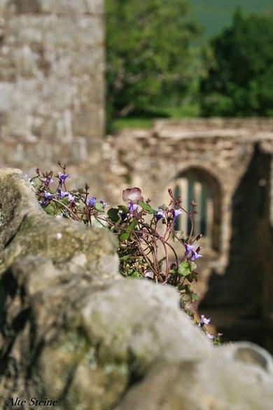 Bodiam_Castle10