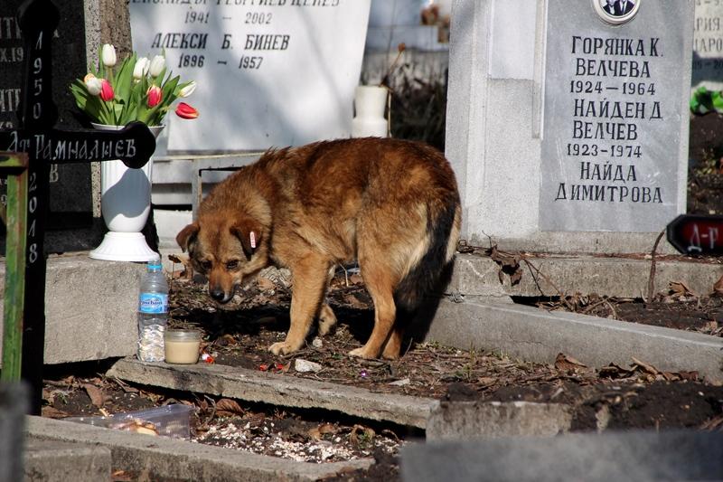 Hunde auf dem Friedhof, Tiere auf dem Friedhof, obdachlose Hunde in Sofia