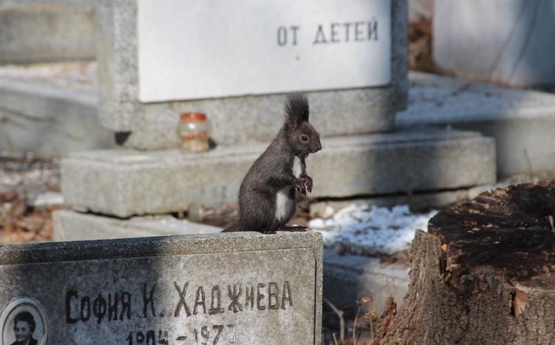 Tiere auf dem Friedhof, Friedhofstiere, Friedhof in Sofia, alter Friedhof,